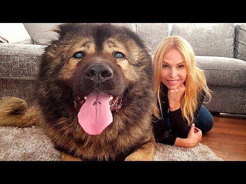 Вопрос: Какие известны сторожевые породы собак В чем отличие сторожевой (см)?