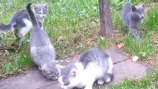 Кошка, родила четырех котят! Лапочки.