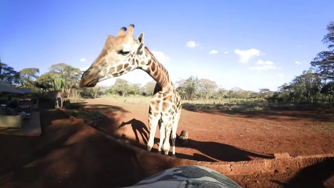 360 VR Video of Giraffe Manor, The Safari Collection - Kenya