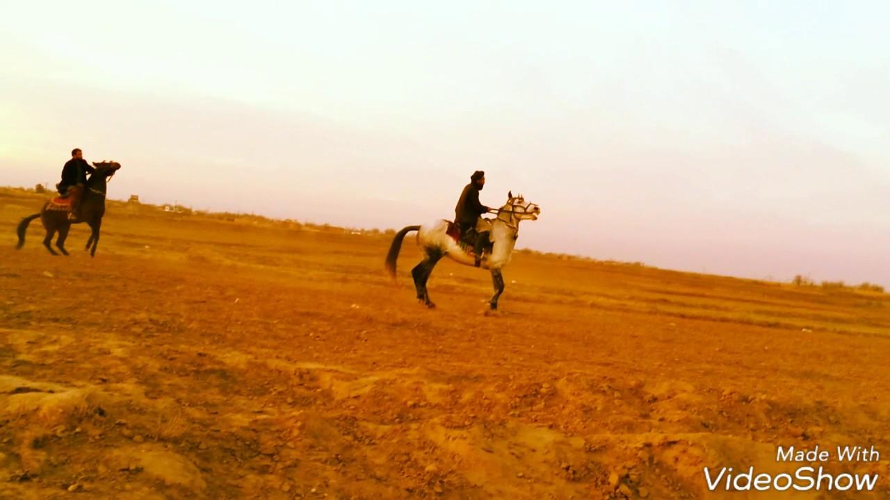 Race Horse Vs Car