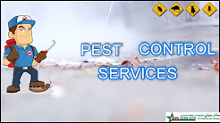 Pest Control Service in Qatar , Pest Control Company Doha Qatar