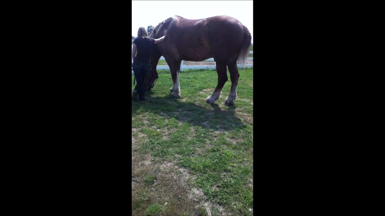 Biggest Horse In The World Youtube