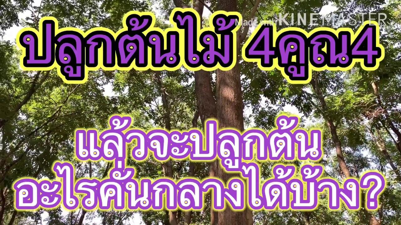 ปลูกต้นไม้4คูณ4-แล้วจะปลูกต้นไม้อื่น-อะไรคั่นกลางได้บ้าง?