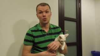 Евгений, Кот и Литтер-Робот / Litter-Robot (автоматический туалет для кошек)
