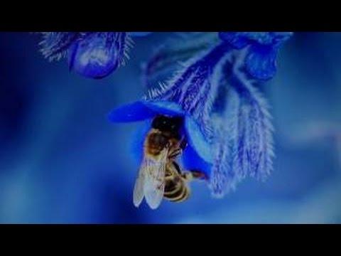 Ловушка для пчел (роев) с супер приманкой (работает на все 100 ...