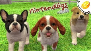 Nintendogs + Cats: French Bulldog & New Friends | Citra Emulator Canary 451 (GPU Shaders) | 3DS