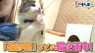 BSテレ東7chは毎年2月22日(月)猫の日に社名を「BSキャッ東」に改名! 猫の愛らしさを発信し、猫に感謝する放送局を目指すべく朝から晩まで猫まみれの番組を放送し ...