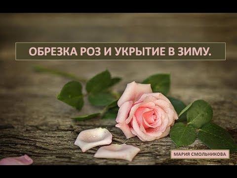 Обрезка роз и укрытие в зиму .