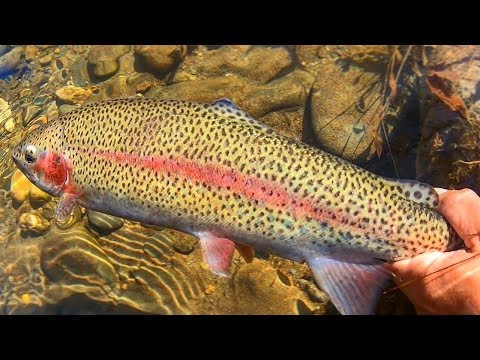 Fishing For Rainbow Trout Around Gatlinburg, Tennessee!! (WATCH UNTIL END FOR SPOTS)
