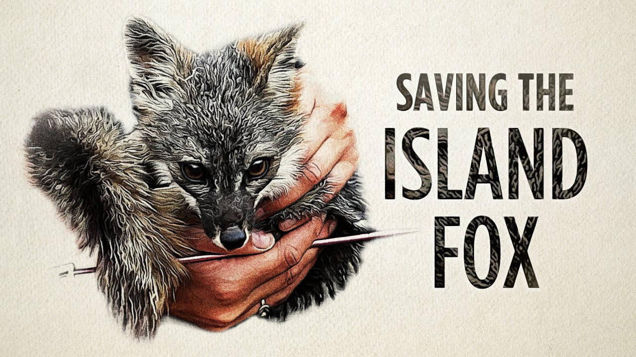 The Hopeful Story Of A Doomed Fox