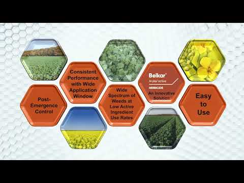 Superior Weed Control With Belkar - A Herbicide Solution With Arylex Active