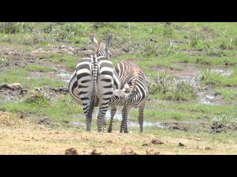Kenya Amboseli National Park Ennio 2013