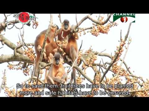 Nature and Life - Episode 224 (Arboreal Mammals)