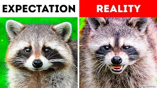 If You See That Cute Animal, Think Twice Before Petting