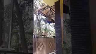 Bejo Trucuk Bonang Bandul