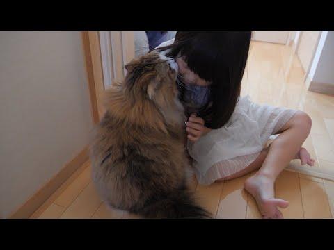 家族で外泊した日、留守番猫が寂しそうに帰りを待つ様子とかわいいお迎え