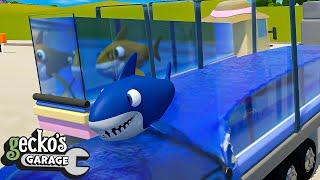 Baby Truck Vs Baby Shark - Educational Videos for Kids