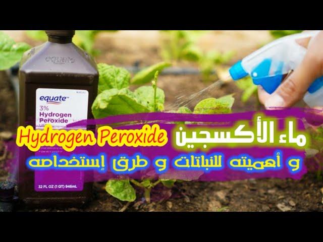 ماء الأكسجين و أهميته و كيفية استخدامه للنباتات Hydrogen Peroxide Youtube