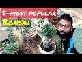 Popular Bonsai Trees | Indoor Bonsai Trees | Type of Bonsai Plants