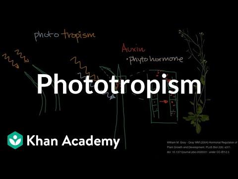 Phototropism  | Plant Biology | Khan Academy