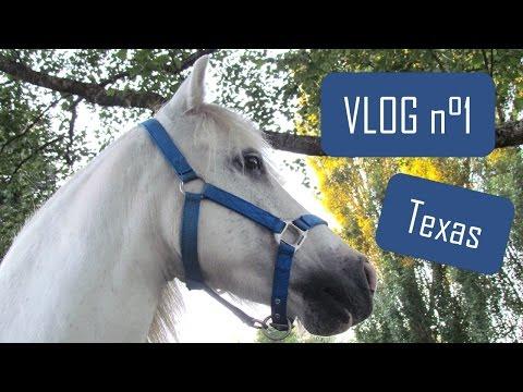 VLOG : arrivée de mon poney