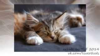 "Фото Кошек. Слайд шоу фото кошек ""Кошки #1"".Спящие кошки."