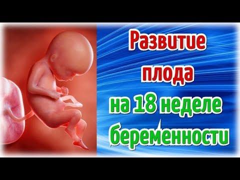 Развитие плода на 18 неделе беременности/ Календарь беременности!