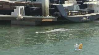 Wayward Gray Whale Spotted Off Long Beach Coast