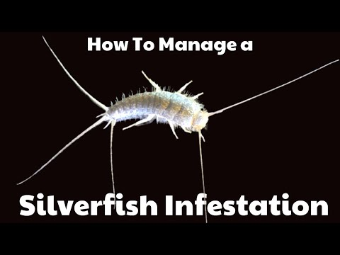 How To Deal With A Silverfish Infestation