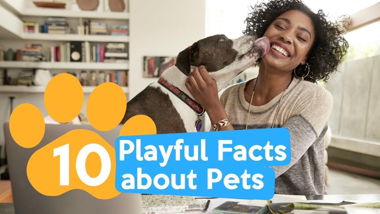 10 Playful Facts about Pets