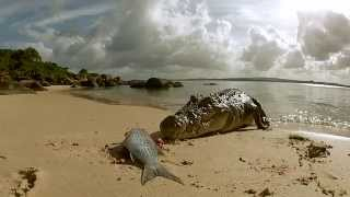 GOPRO gets the BITE from SALT WATER CROCODILE