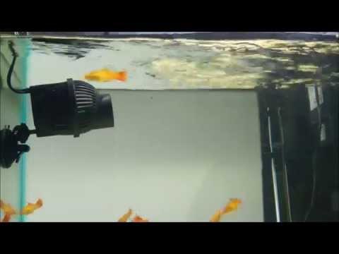 Power Head Circulation Pumps- Flow Demo