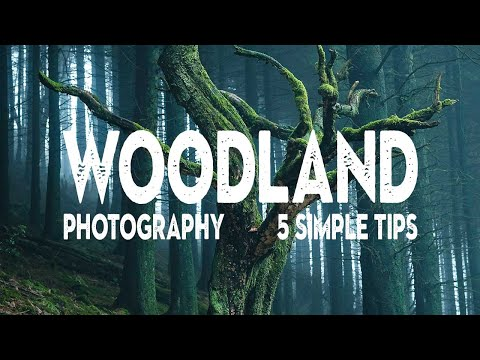 5 WOODLAND PHOTOGRAPHY TIPS I wish I knew earlier from YouTube · Duration:  13 minutes 35 seconds