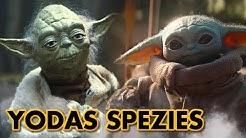 Wie viele Angehörige von Yodas Spezies gibt es?