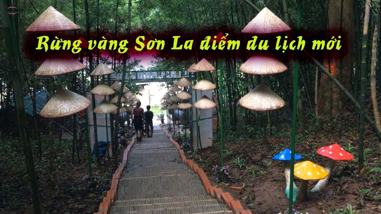 Rừng vàng Sơn La điểm du lịch mới hấp dẫn, Khu du lịch sinh thái bản địa rừng vàng