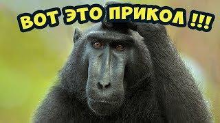 Тест на психику │Что делает эта обезьяна! │Смешные животные.Подборка 2018😃