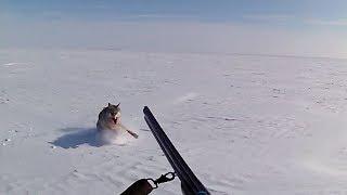 ОХОТА НА ВОЛКОВ 7 -2017 -Wolf hunting (Степные охотники 7)