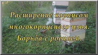 Работа на пасеке: пчелосемья расширена (видеоурок). Борьба с роением. Пчеловодство для начинающих