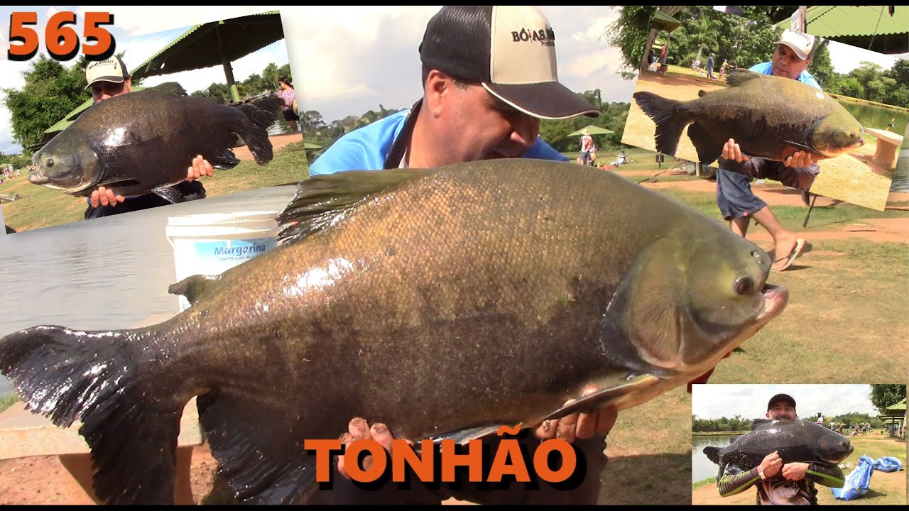 Tonhão - Nossa primeira visita a este ótimo pesqueiro - Fishingtur na TV 565