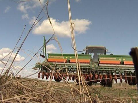 От зерна до готового комбикорма: в области появится уникальный аграрный комплекс