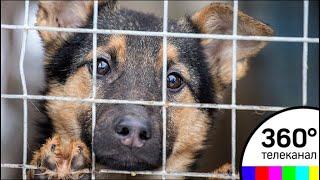 В тверском приюте для собак зоозащитники нашли их обгоревшие кости