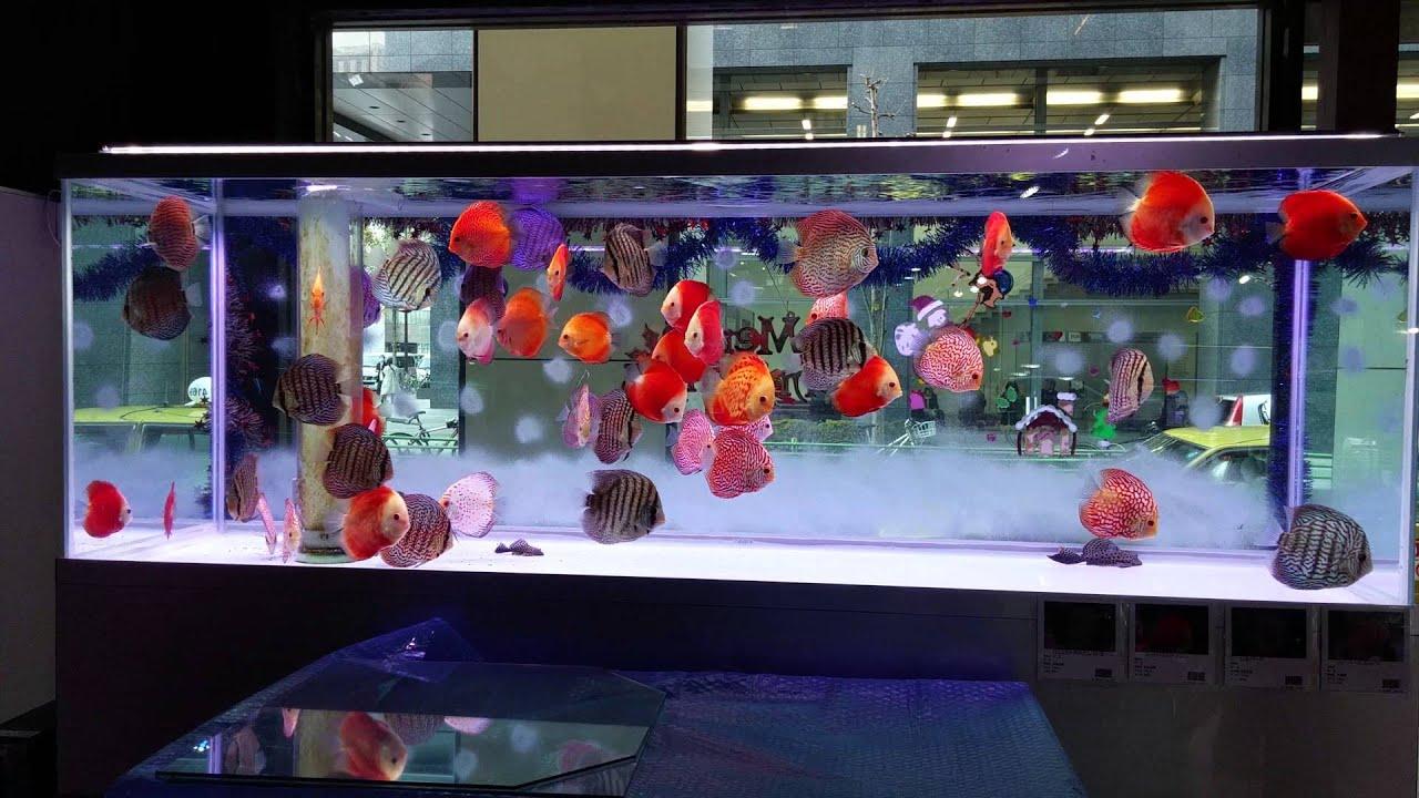 Paupau Aqua Garden YouTube
