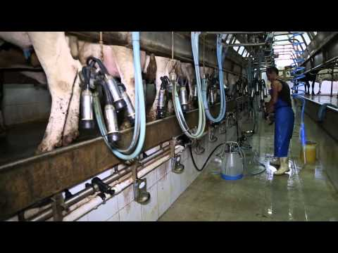 Fresh Milk Products Production