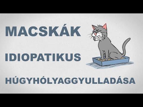 Macskák idiopatikus húgyhólyaggyulladása - csak egyszerűen