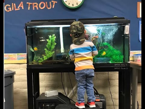 New Mexico Fish And Wildlife Conservation Office: Native Fish In The Classroom 2019-2020