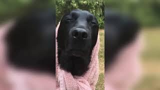 Смешные животные (видео)🐶😹🙈