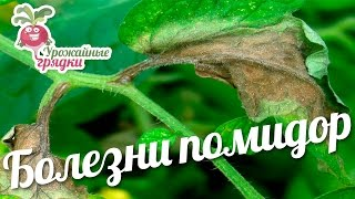 Болезни помидор. Сорта и гибриды томатов. Обзор сортов помидор #urozhainye_gryadki(, 2016-08-16T12:00:00.000Z)