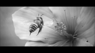 Стихия/Elementum - Фильм поэзия/Poetry film