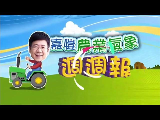 2020.06.01─嘉愷農業氣象週週報
