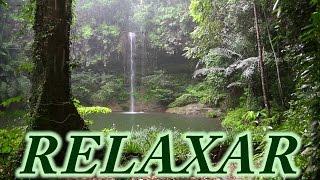 Som de Chuva e Floresta - 2 Horas - Dormir, Relaxar